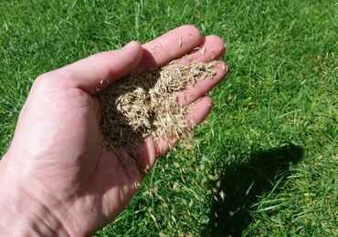 Посів газону