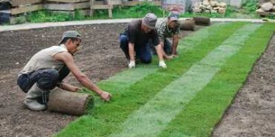 Укладка рулонного газону