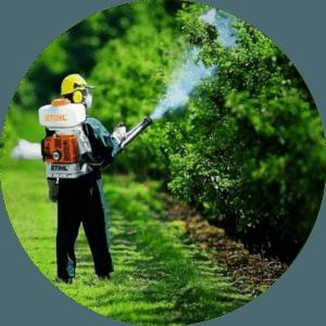 Лікування дерев Львів