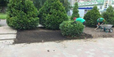 Озеленення у Львові