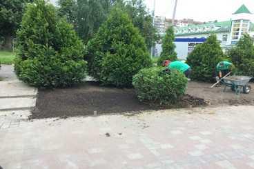озеленення_львів