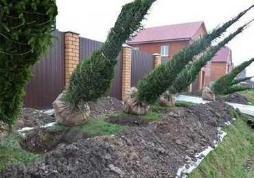 Посадка дерев
