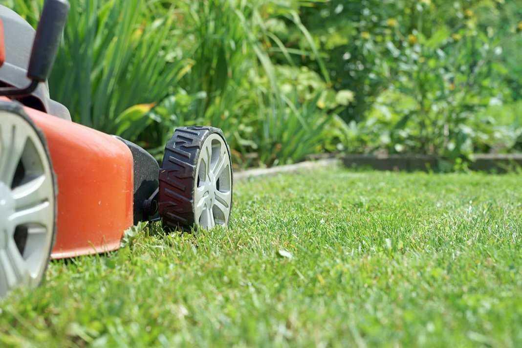 Як правильно доглядати за газоном?
