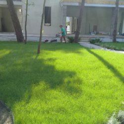 Укладка рулонного газону Брюховичі23