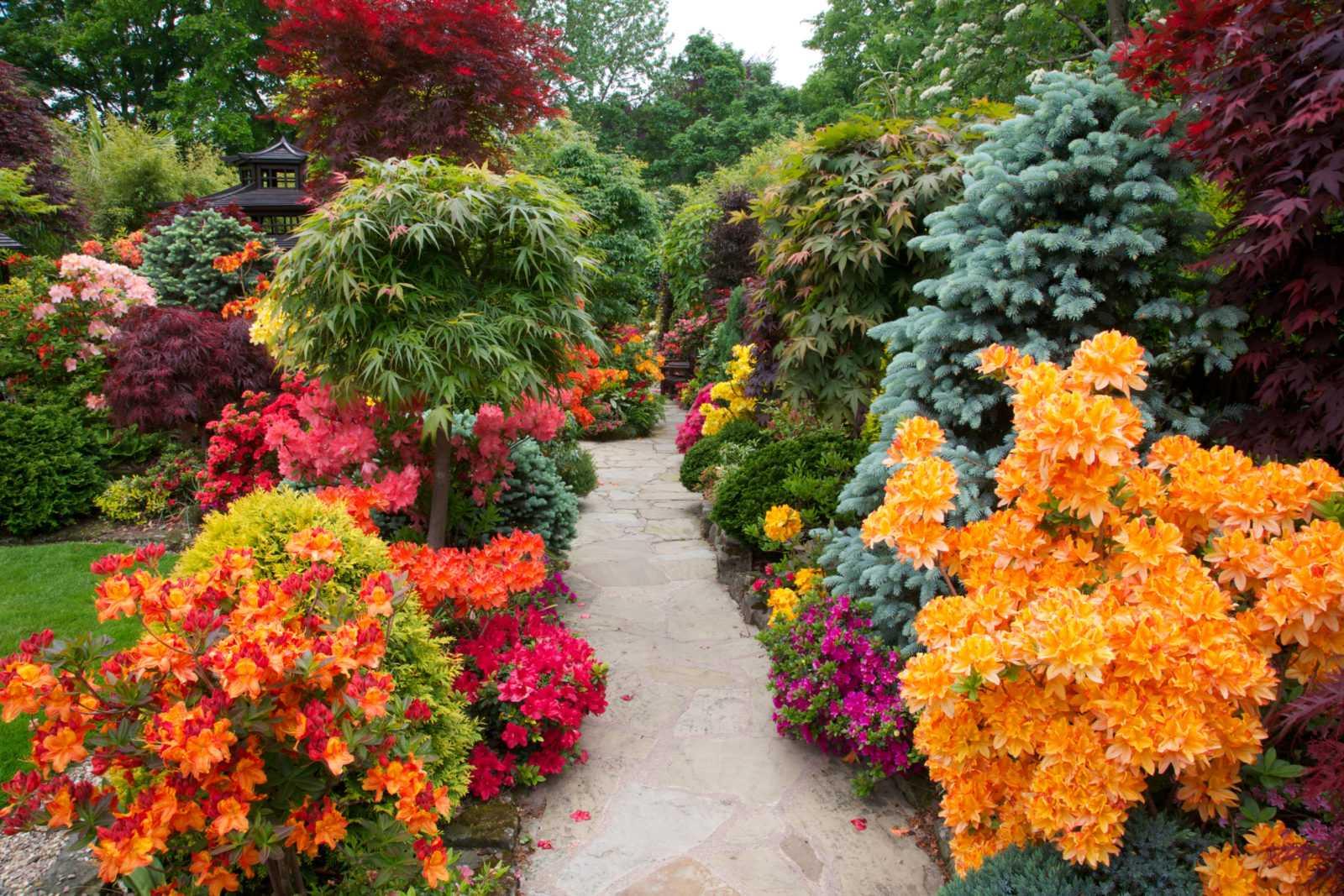 Кущі осінній сад