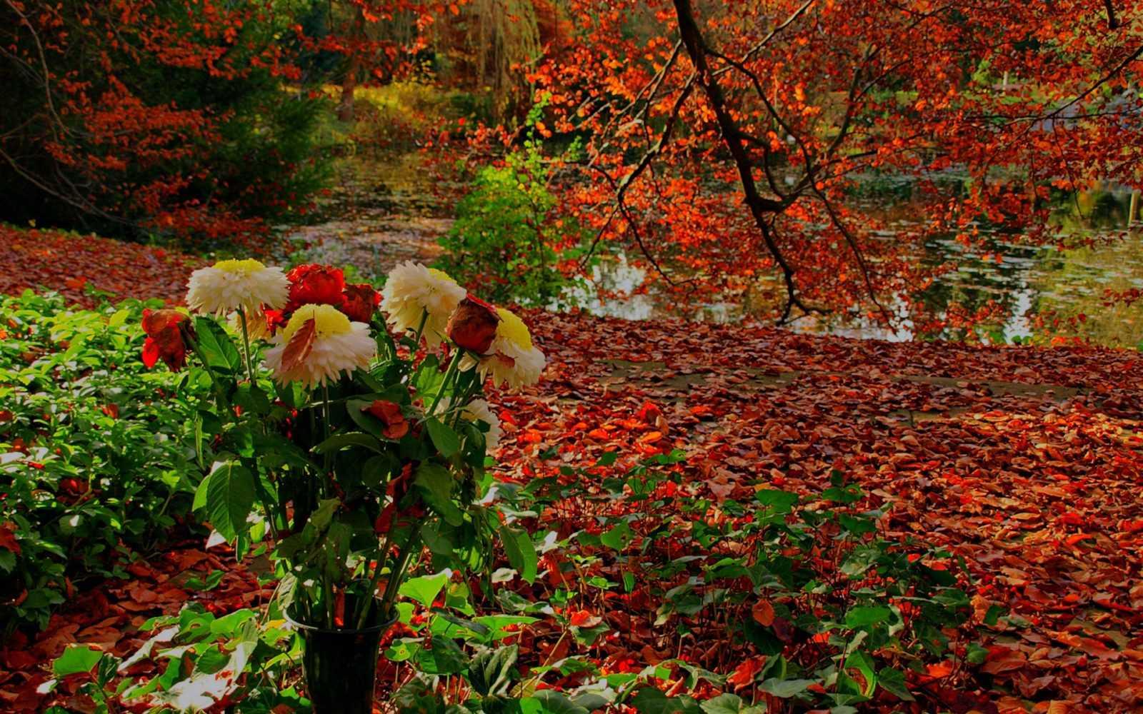 Квіти осінній сад