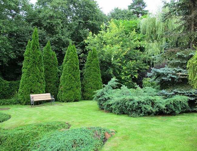 Сад з хвойних дерев
