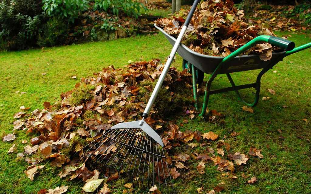 Як підготувати сад до зими (6)