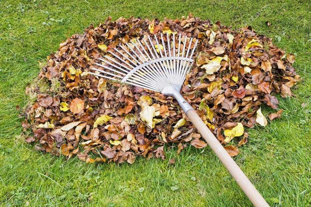 Як підготувати сад до зими