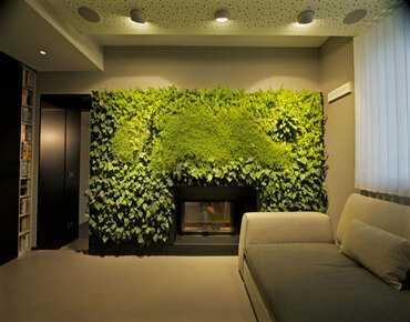 Фітостіна вертикальне озеленення