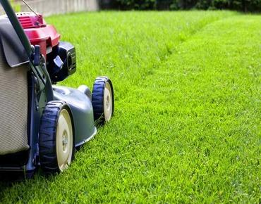 Догляд за газоном влітку