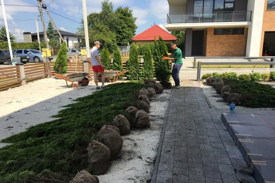Підготовка до посадки дерев Капітель-min